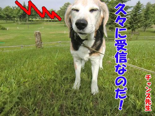 チャンスとティアラ+ココ-20130702-6-500.jpg
