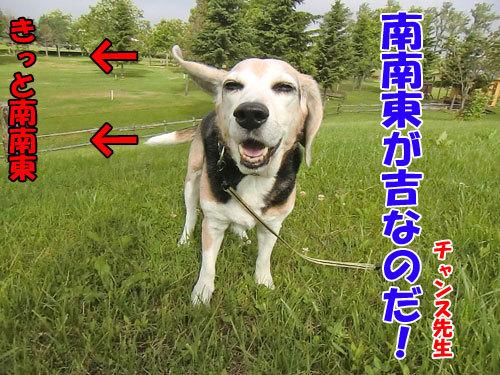 チャンスとティアラ+ココ-20130702-7-500.jpg