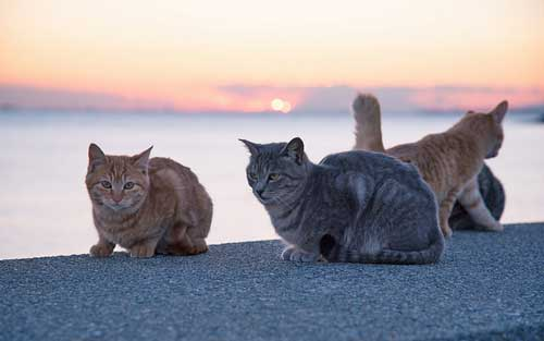 cats-3-20161027