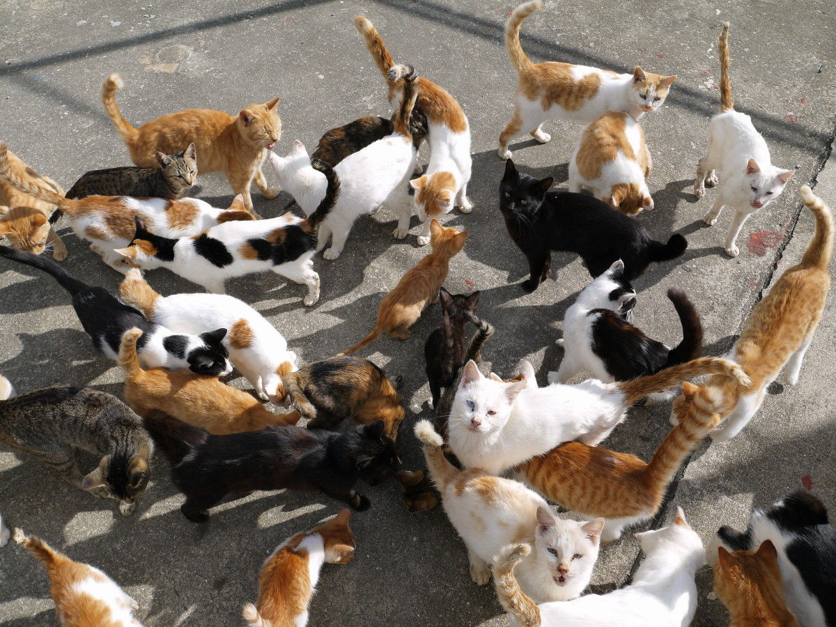 cats20161027
