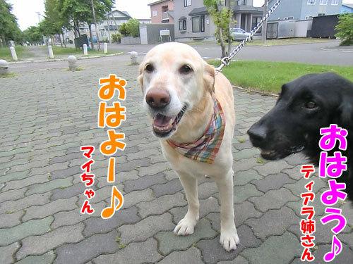 チャンスとティアラ+ココ-20130703-0-500.jpg