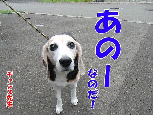 チャンスとティアラ+ココ-20130703-6-500.jpg