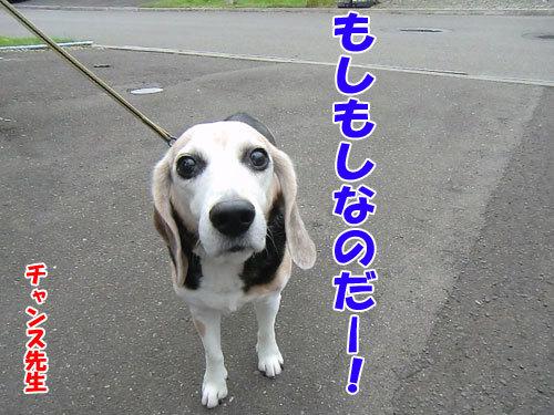 チャンスとティアラ+ココ-20130703-7-500.jpg
