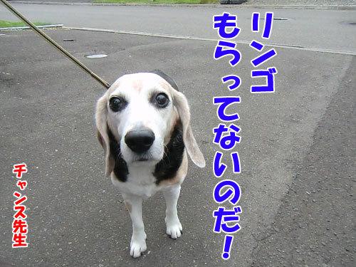 チャンスとティアラ+ココ-20130703-8-500.jpg
