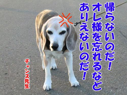 チャンスとティアラ+ココ-20130703-9-500.jpg