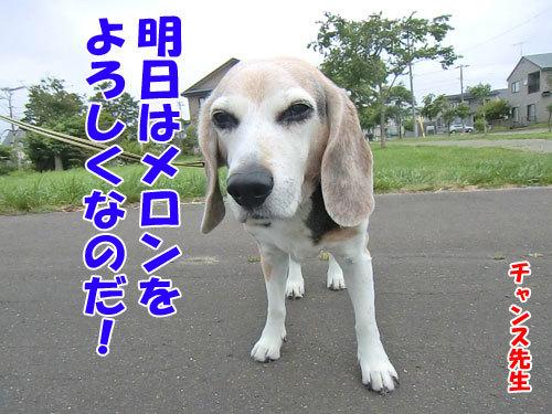チャンスとティアラ+ココ-20130703-10-500.jpg