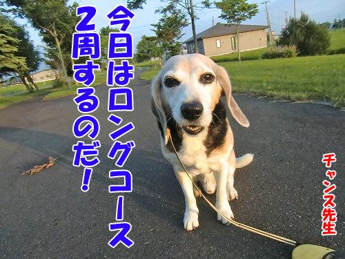 チャンスとティアラ+ココ-20130704-1-500.jpg