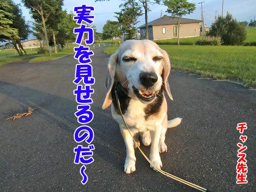 チャンスとティアラ+ココ-20130704-2-500.jpg