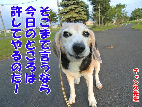 チャンスとティアラ+ココ-20130704-4-500.jpg