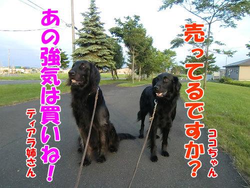 チャンスとティアラ+ココ-20130704-5-500.jpg
