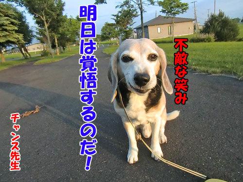 チャンスとティアラ+ココ-20130704-6-500.jpg