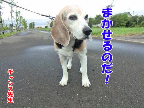 チャンスとティアラ+ココ-20130705-1-500.jpg