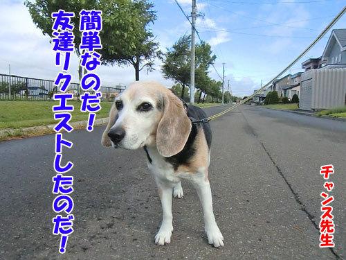 チャンスとティアラ+ココ-20130705-4-500.jpg
