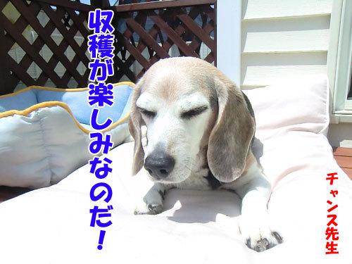チャンスとティアラ+ココ-20130708-9-500.jpg