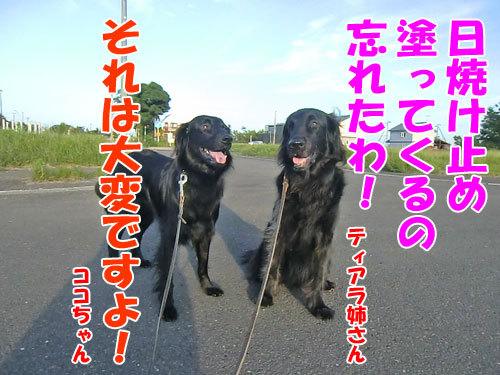 チャンスとティアラ+ココ-20130722-2-500.jpg