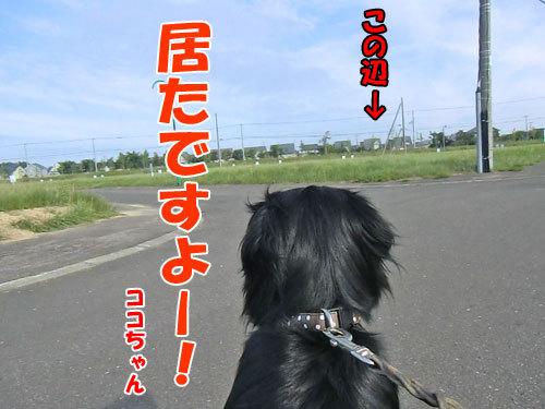 チャンスとティアラ+ココ-20130722-3-500.jpg