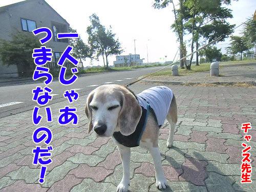 チャンスとティアラ+ココ-20130722-7-500.jpg