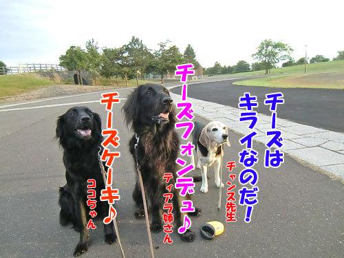 チャンスとティアラ+ココ-20130726-2-500.jpg