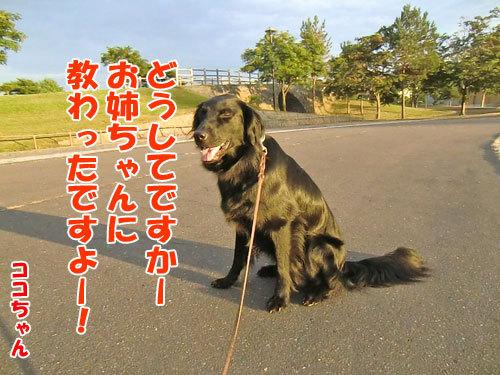 チャンスとティアラ+ココ-20130726-6-500.jpg