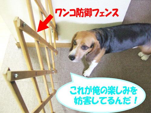 チャンスとティアラ+ココ-051219-1.jpg