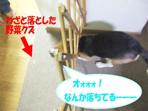チャンスとティアラ+ココ-051219-3.jpg