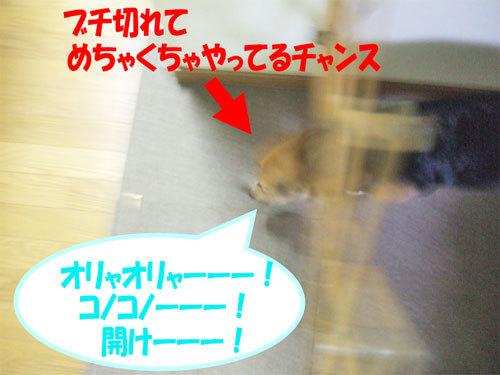 チャンスとティアラ+ココ-051219-4.jpg