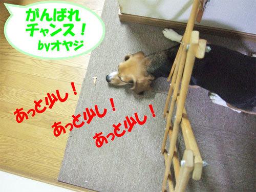 チャンスとティアラ+ココ-051219-5.jpg