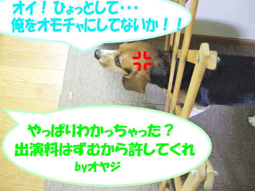 チャンスとティアラ+ココ-051219-6.jpg